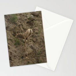 Baby Mountain Goat in Yellowstone National Park, WY Stationery Cards