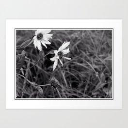 Wild Field Flowers in Monochrome Art Print