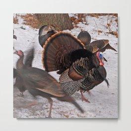 Turkey Snow Dance Metal Print