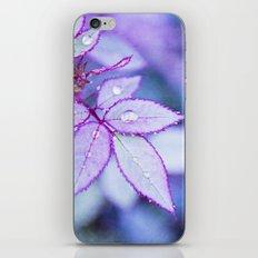 Lilac Rim iPhone & iPod Skin