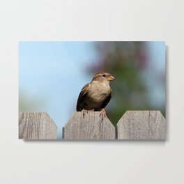 Feathered Friend perched on a fence Metal Print