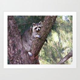 Lazy Raccoon Art Print