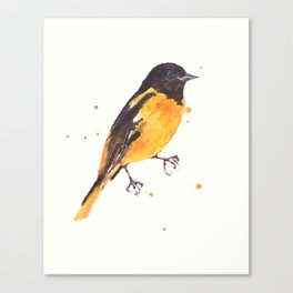 Baltimore Oriole, Bird paintings, black and orange, american birds, ornithologist pillow Canvas Print