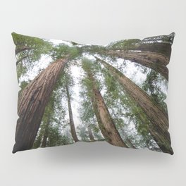 Redwood Forest Adventure VI - Nature Photography Pillow Sham