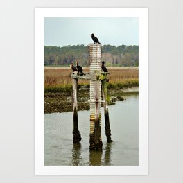 Four Cormorants Art Print