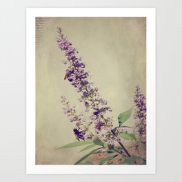 Texas Lilac and Bees Art Print