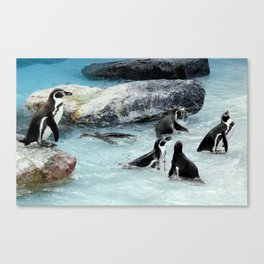 Penguins. Canvas Print