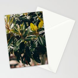 Magnolia Tree in Jackson Square Stationery Cards