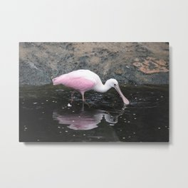 National Aviary - Pittsburgh - Roseate Spoonbill Metal Print