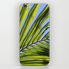 Palm Frond iPhone & iPod Skin