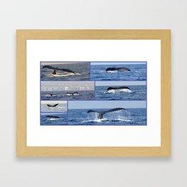 """whales tales""- Mauii  Framed Art Print"