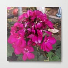Pink Geranium Metal Print