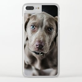 Weimaraner puppy looking sweet Clear iPhone Case