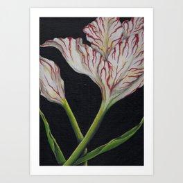 Striped Tulip on Black Art Print