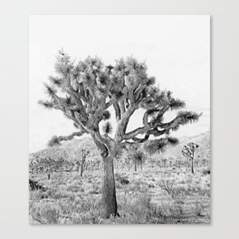 Joshua Tree Giant by CREYES Canvas Print
