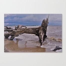 Drift Wood Beach 6 Canvas Print