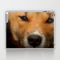 New Guinea Singing Dog Laptop & iPad Skin