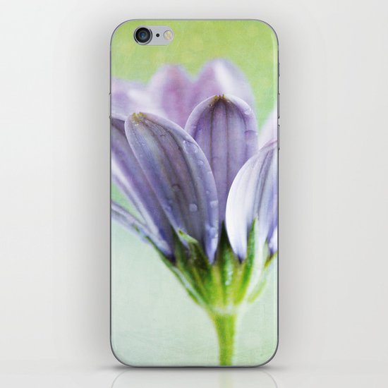 african daisy iPhone & iPod Skin