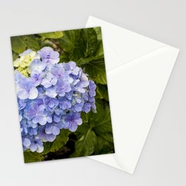 Lavender Hydrangeas in Nicaragua Stationery Cards
