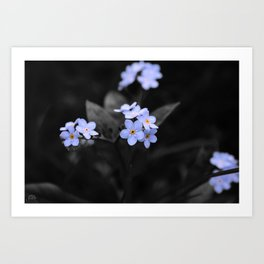 Forget Me - Not Art Print