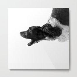 Cocker Spaniel Dog Metal Print
