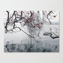 Plane Tree Branches Hanging Over Lake Canvas Print