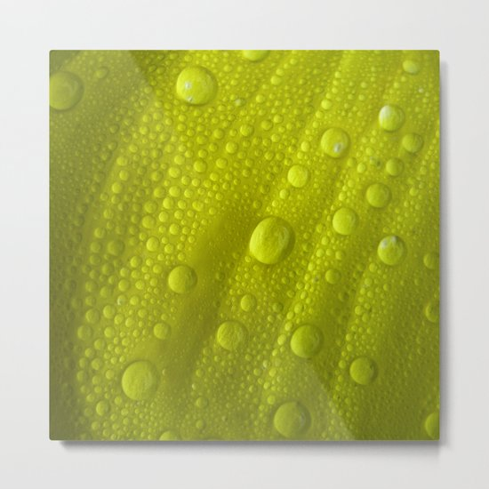 water drops petal IV Metal Print