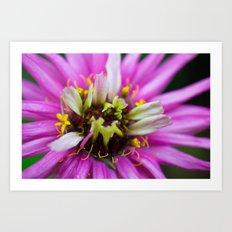Macro Violet Flower Art Print