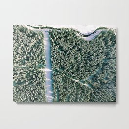 Trees below Metal Print