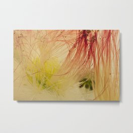 Mimosa Tree #55 Metal Print