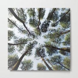 Looking Up At Trees Metal Print