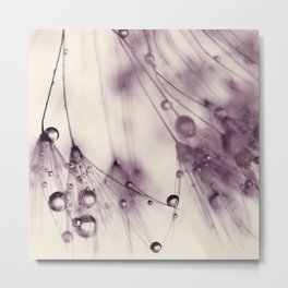 dandelion aubergine Metal Print