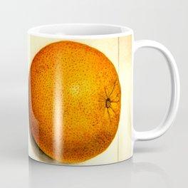 Vintage Botanical Navel Orange Coffee Mug
