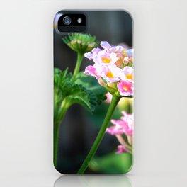 Lantana close up iPhone Case