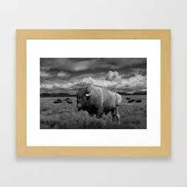 American Buffalo Bison in the Grand Teton National Park in Black and White Framed Art Print