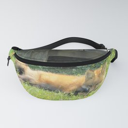 YOUNG RED FOX RELAXING Fanny Pack