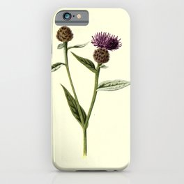 Flower SMALL KNAPWEED iPhone Case