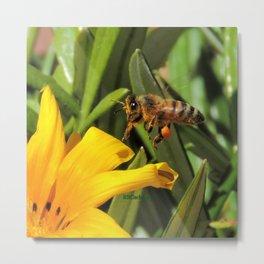 Pollen Express 221 Metal Print