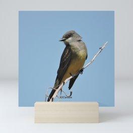 A Cassin's Kingbird Scopes the Skies for Flies Mini Art Print