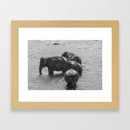 Elephant Showers Framed Art Print