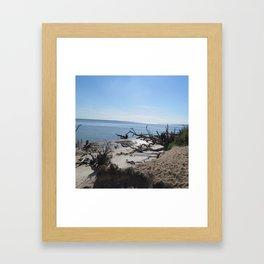 The Boney Trees on the Beach Framed Art Print
