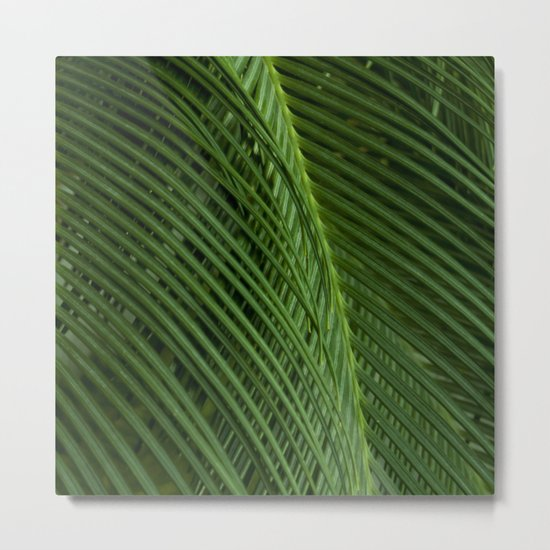 Palm leaves 2 Metal Print