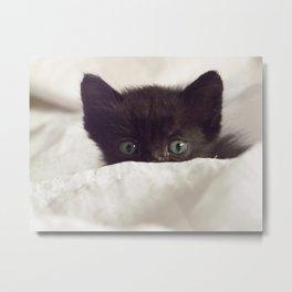 Zeze kitten Metal Print