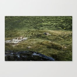 Now that I'm Up Might as Well Fish Canvas Print
