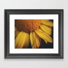 Sunflow Daze Framed Art Print