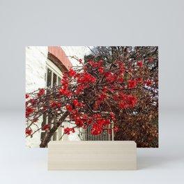Flowering Tree in Cornwall Mini Art Print