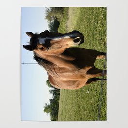 Brown Horse in a Pasture Poster