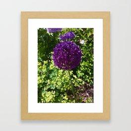 PomPom Framed Art Print
