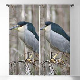 black crowned night heron Blackout Curtain