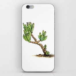 CRASSULA OVATA iPhone Skin